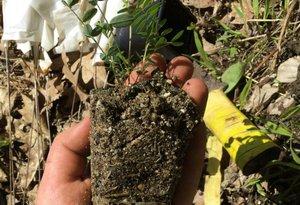 Astragalus plug