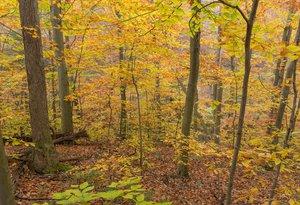Autumn Woodland, UL