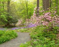 Garden in the Woods Curtis Woodland Path, UL