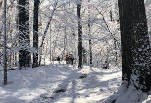 GITW_Winter.Websize.jpg