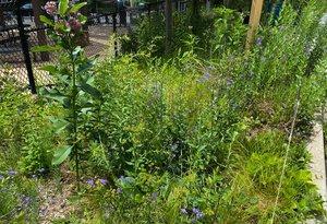 Pollinator Garden 1 recent