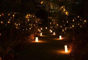 Night of Illumination