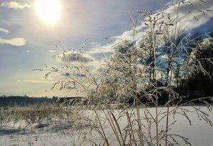 winter grass nasami cropped