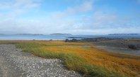 SOS_beach_grass_shells_AbigailUrban.jpg