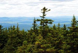 spruce-fir habitat cover image PDReport