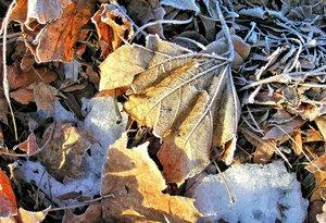 fallen_leaves_CC0CreativeCommons.jpg