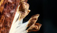 milkweed-seeds2_crop2.jpg